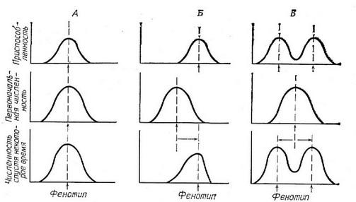 Схема трех типов отбора.