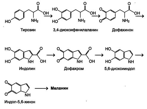 Экологические факторы.  Патогенетические механизмы действия физических факторов на организм человека.