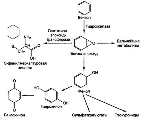 Схема детоксикации бензола