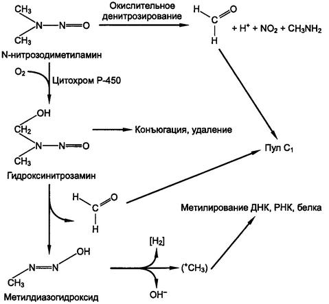 Действие на организм человека м-нитрозосоединений.  Медицинская экология.  Роль нитратов, нитритов и...