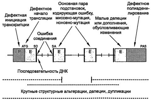 Схема строения гена человека с